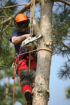 élagage de l'arbre